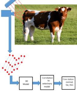 Cow - Animal Health Monitoring
