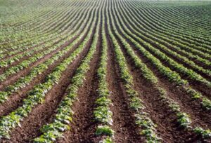 Image Processing for Precision Agriculture - Potato Crop