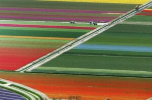 InfoAg Precise Agriculture